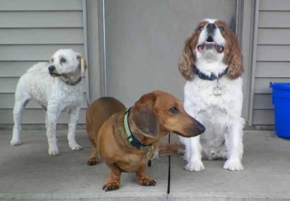 Twinkie C., Jojo M., & Finn W.(600x436)
