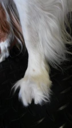 front foot before iowa city dog groomer