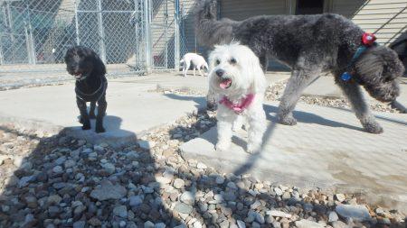 dog daycare tiffin